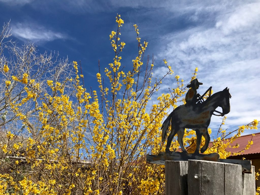 Decorative cowboy and blooming forsythia in front of a house at Canyon of the Ancients Guest Ranch