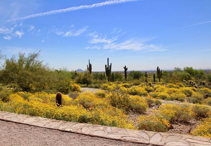 Scottsdale in spring