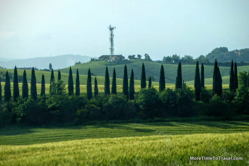 Row of cypress trees on the way to Perugia
