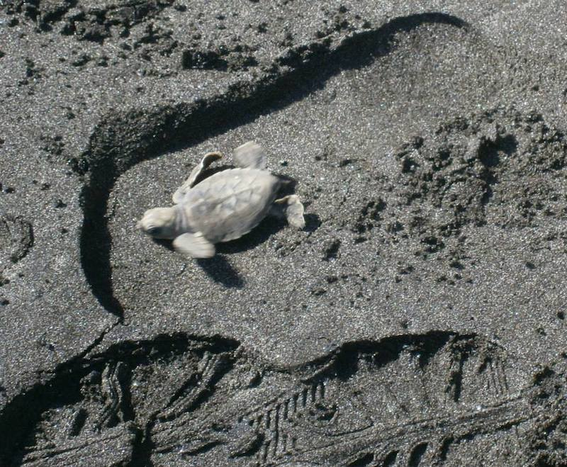 Sea Turtle (Credit: Sue Campbell)