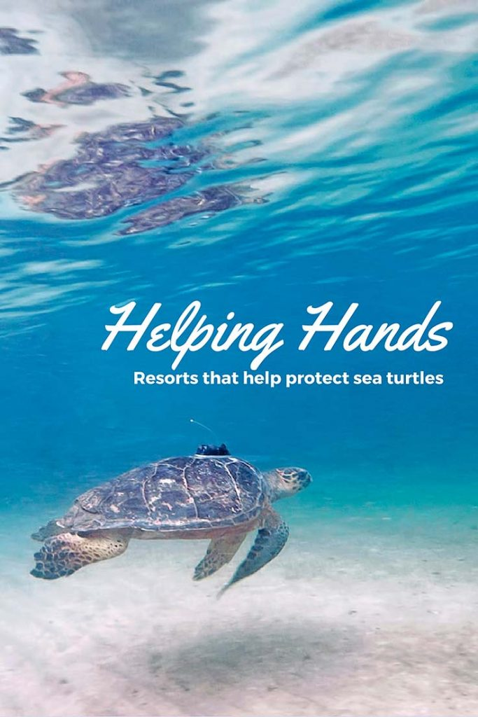 protect sea turtles