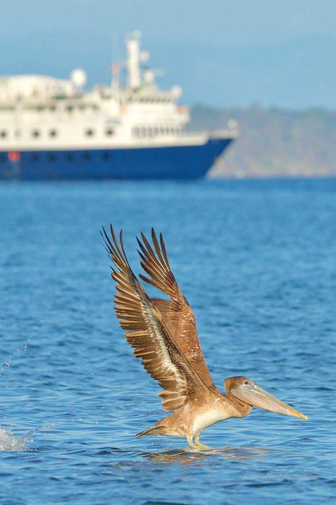 costa rica adventure cruise safari voyager
