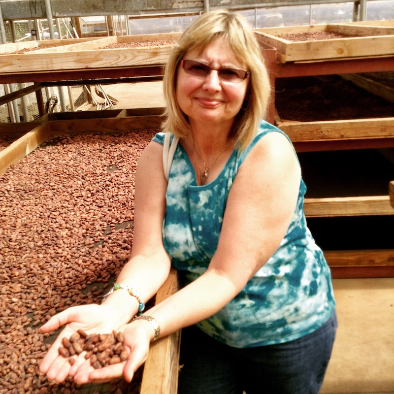 Author examines cocoa beans drying in the Hawaiian sun