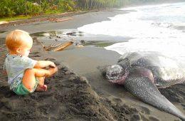 resorts the protect sea turtles