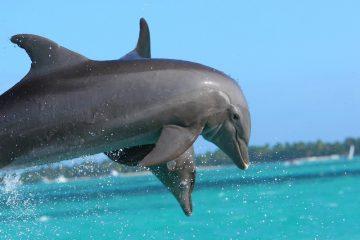 Punta Cana Family Getaway (Credit: Pixabay)