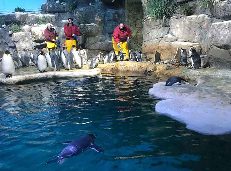 things to do in Galveston - Moody Aquarium Penguin Pool