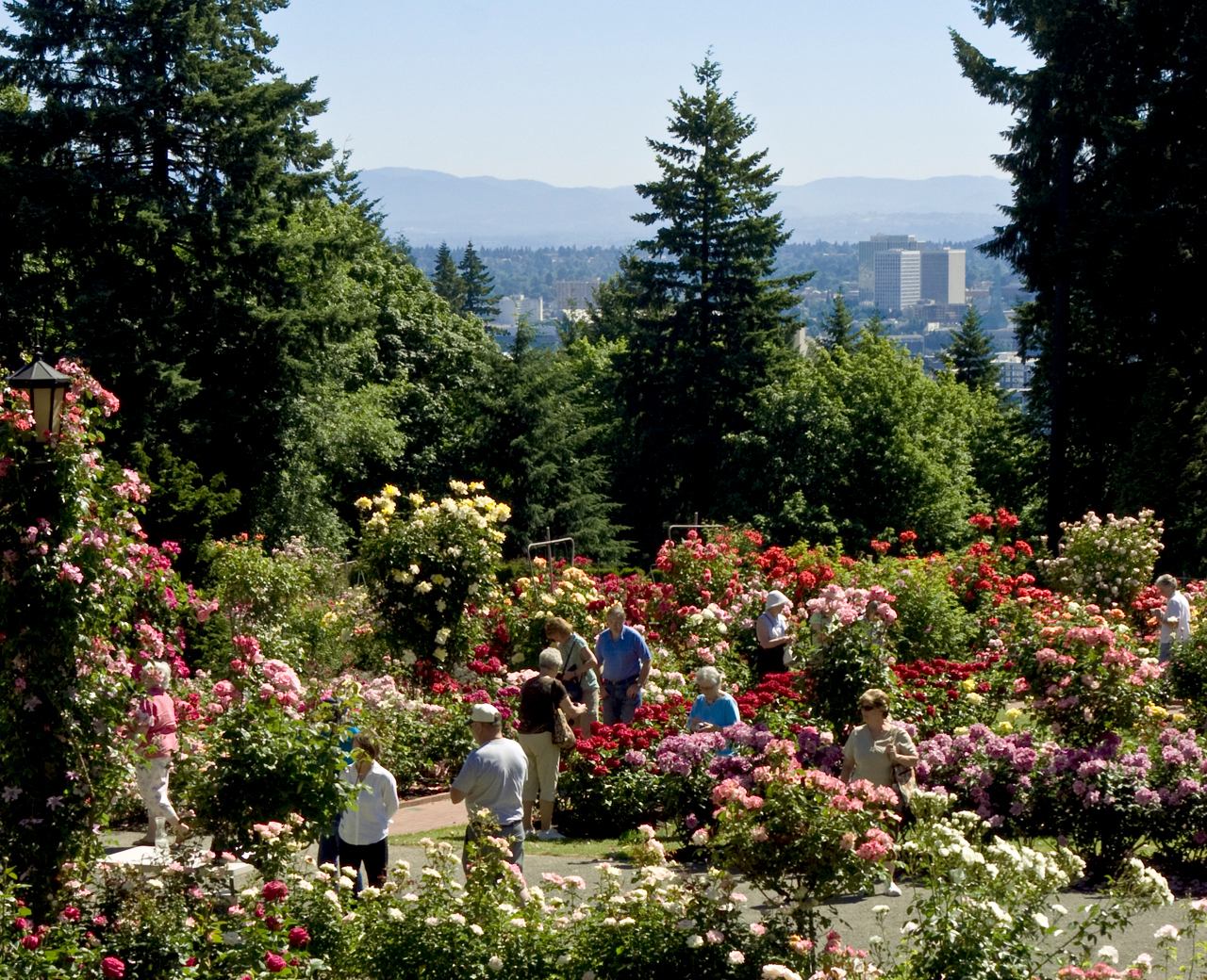 Rose Garden (Credit: TravelPortland)