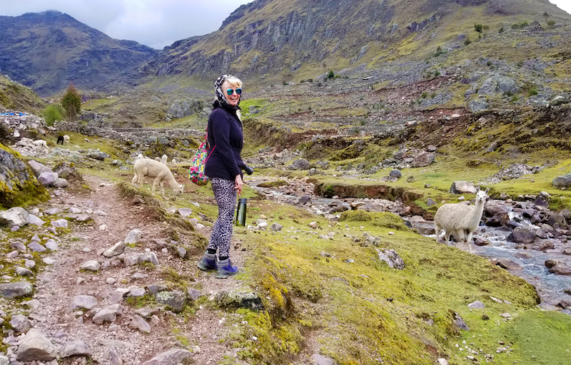 Alpacas on the path to the Huacahuasi waterfall