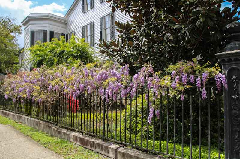 Commanders:Lafayette Cemetery historic homes on Prytania