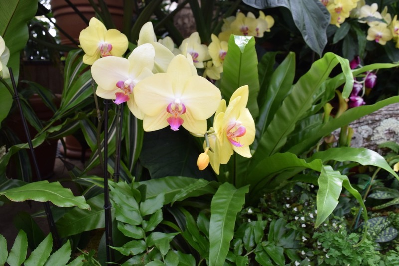 Orchids in the Biltmore Conservatory (Credit: J.S. Fletcher)