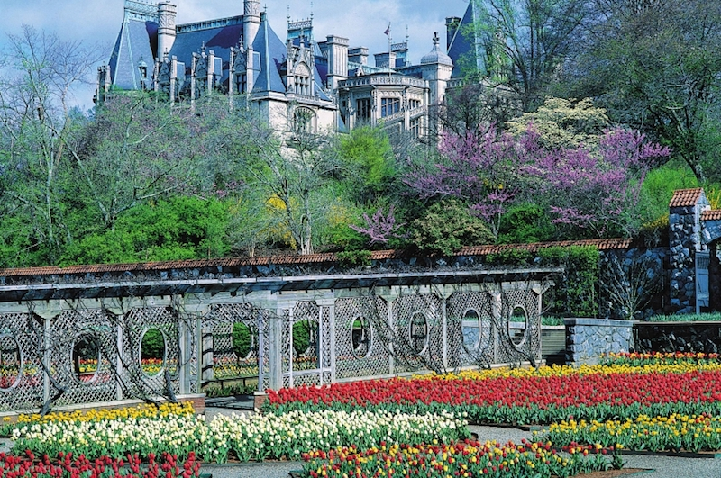 Biltmore Tulips (Credit: The Biltmore Company)