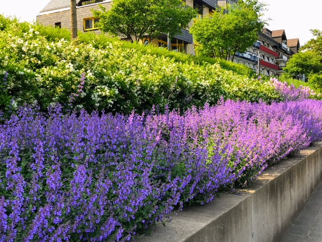 Flowers along the river bank in Koblenz, Germany