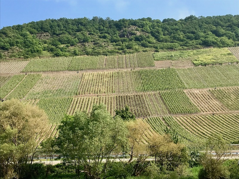 One of the many vineyards along the Rhine (Credit: Jerome Levine)