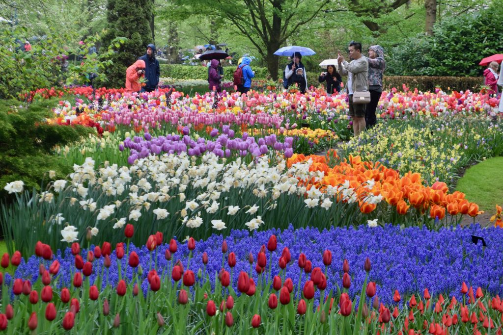Keukenhof: Nothing short of magical