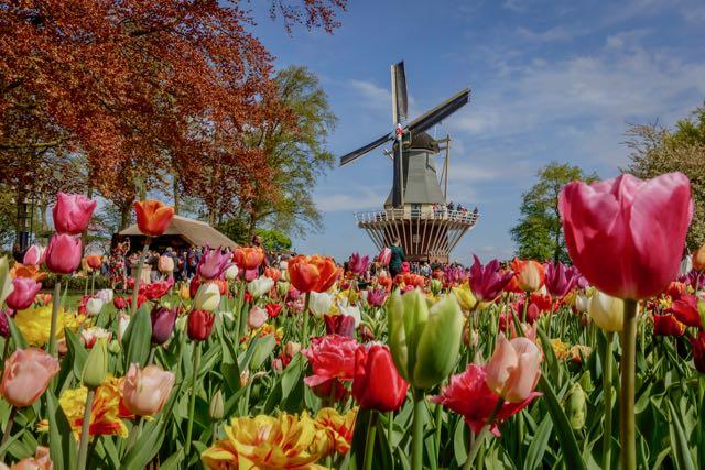 Windmill at Keukenhof (Credit: Keukenhof / Laurens Lindhout)
