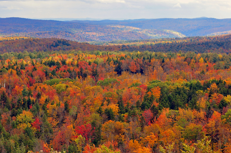 Lush fall foliage in Vermont