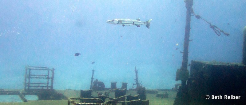 View of sunken ship from the Atlantis