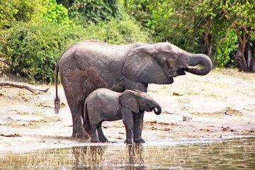 Mother and child on the Chobe River