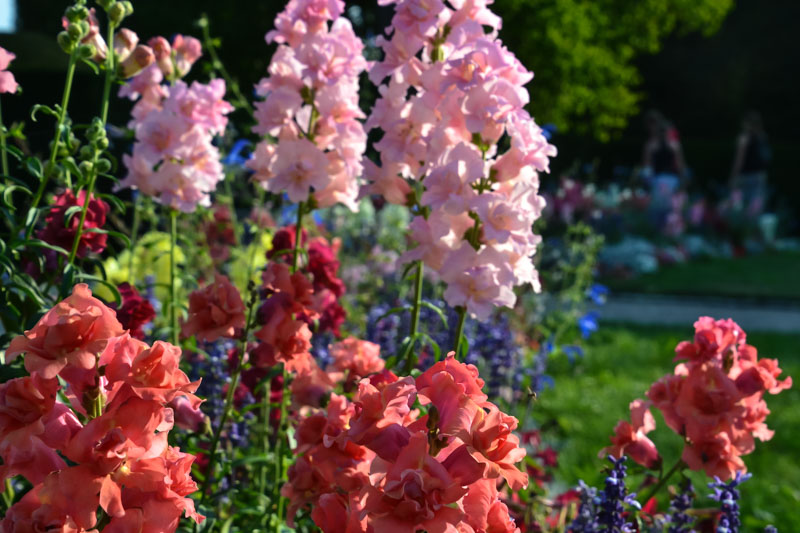 Flowers in bloom in the Castle Gardens