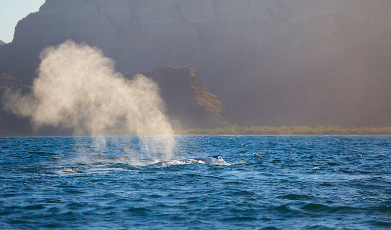 Whale watching on the Sea of Cortez (credit: Villa del Palmar)