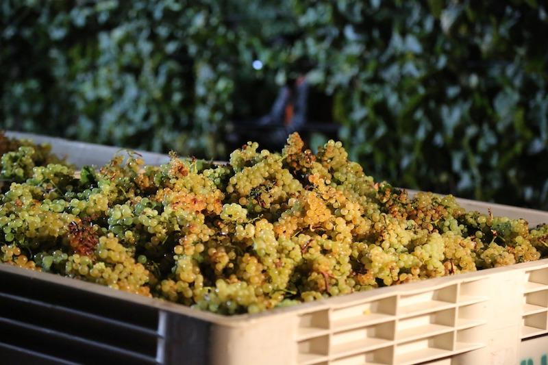 Napa wine experience delivers unsurpassed luxury
