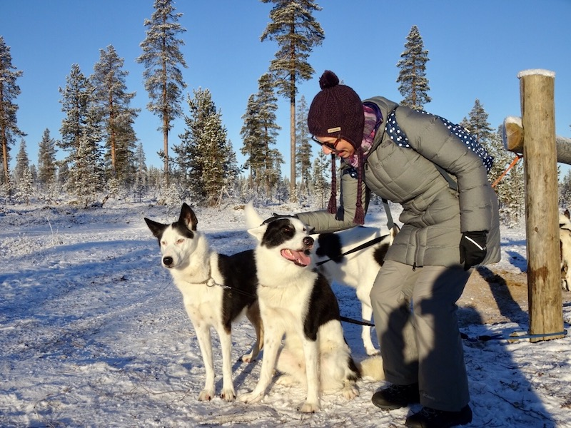 Hiking with Huskies _ What to see and do in Lapland