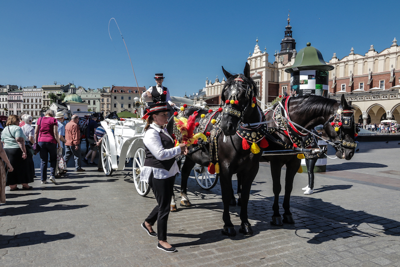 Horse and carriage rides for tourists in Krakow main square