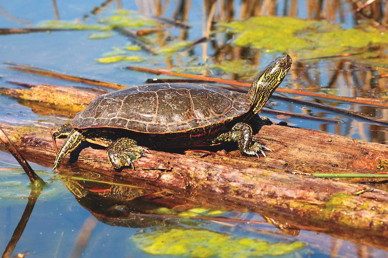 Turtle Mountain Provincial Park (Credit: Shutterstock, John Kramp)