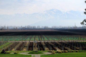 Bodega Norton winery is in the Mendoza wine region