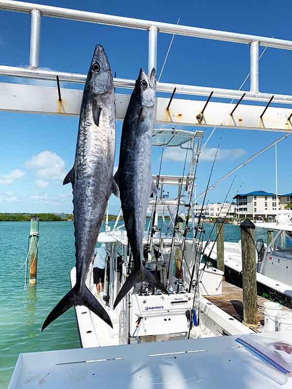Fishing charters at Hawks Cay Marina