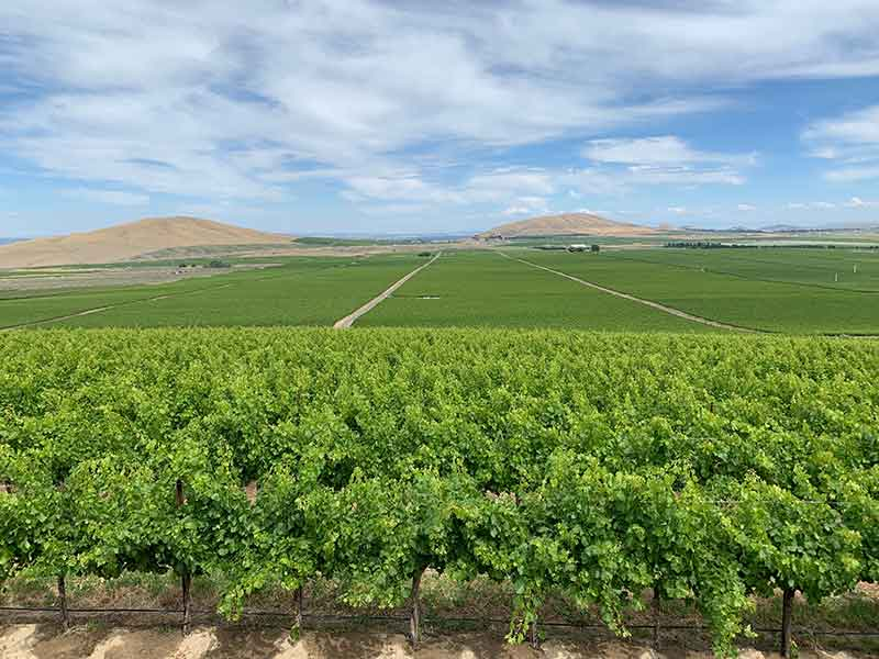 Washington Wine Country View of Goose Ridge Vineyards