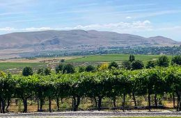 Washington Wine Country: View of vineyards in the Red Mountain AVA