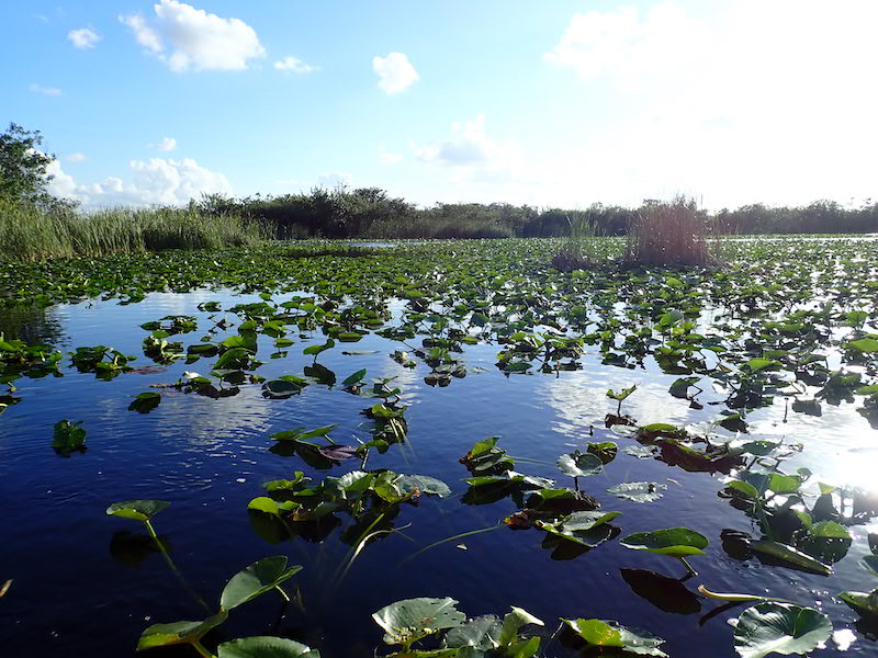 The Everglades near enough for an after of exploration.