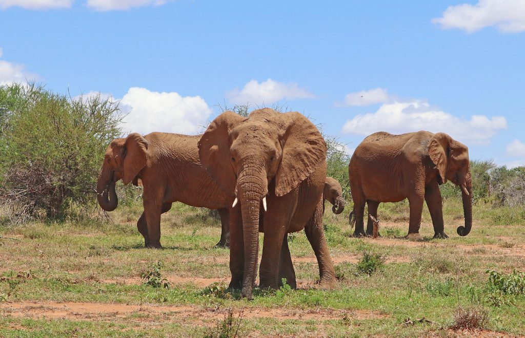 At Loisaba, it's all about the elephants