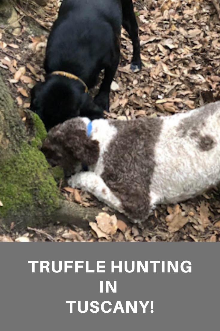 Truffle Hunting in Tuscany pin