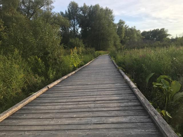 Creekside trail outside Toronto