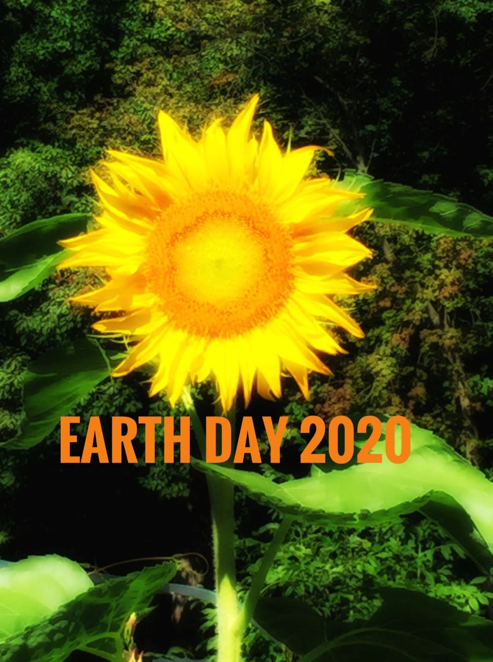 "The phrase ""Earth Day 2020""superimposed over a photograph of a sunflower."