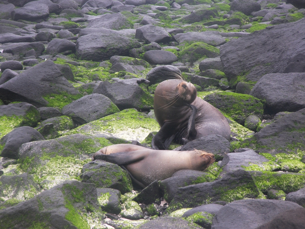 Sea lions bathing
