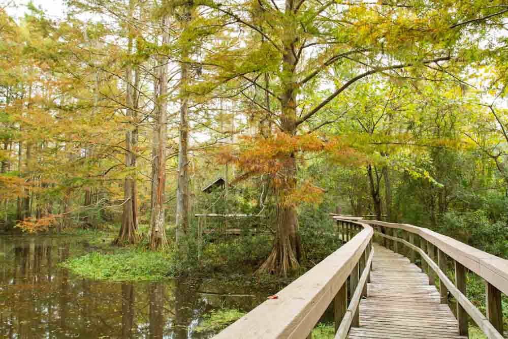 No matter the season, the Northlake Nature Center brings peace and harmony to the soul