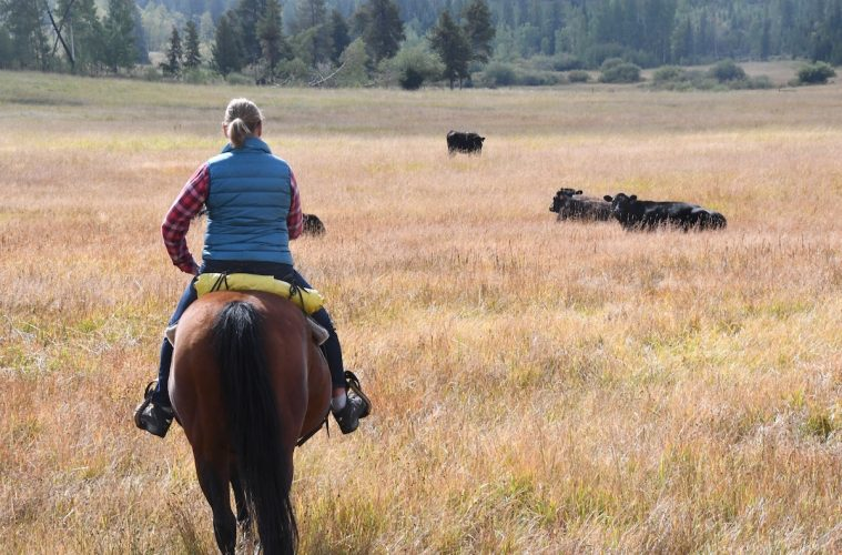 On a cattle ranch in Grand County, Colorado