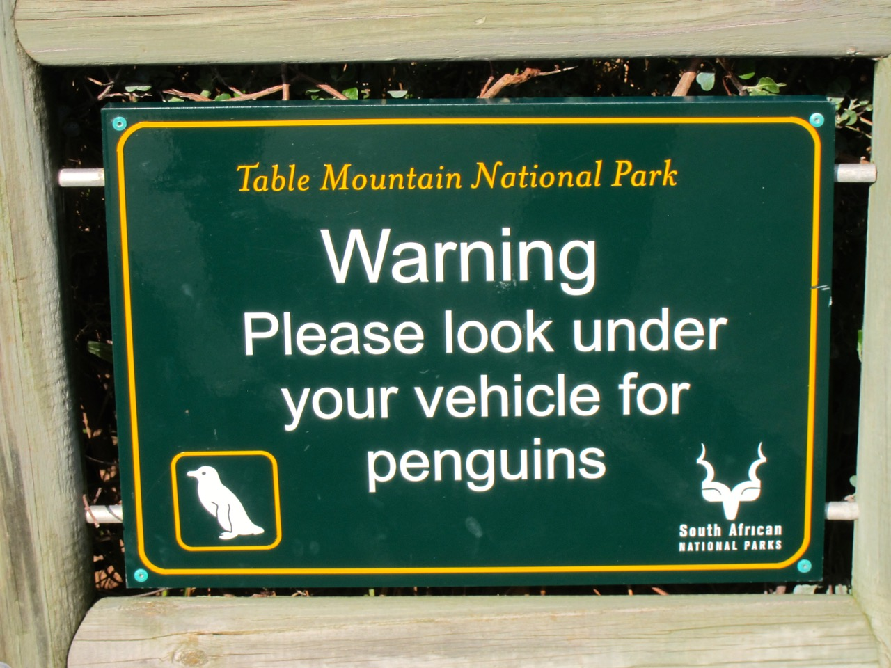 Wildlife watching sign warning to look under vehicle for penguins