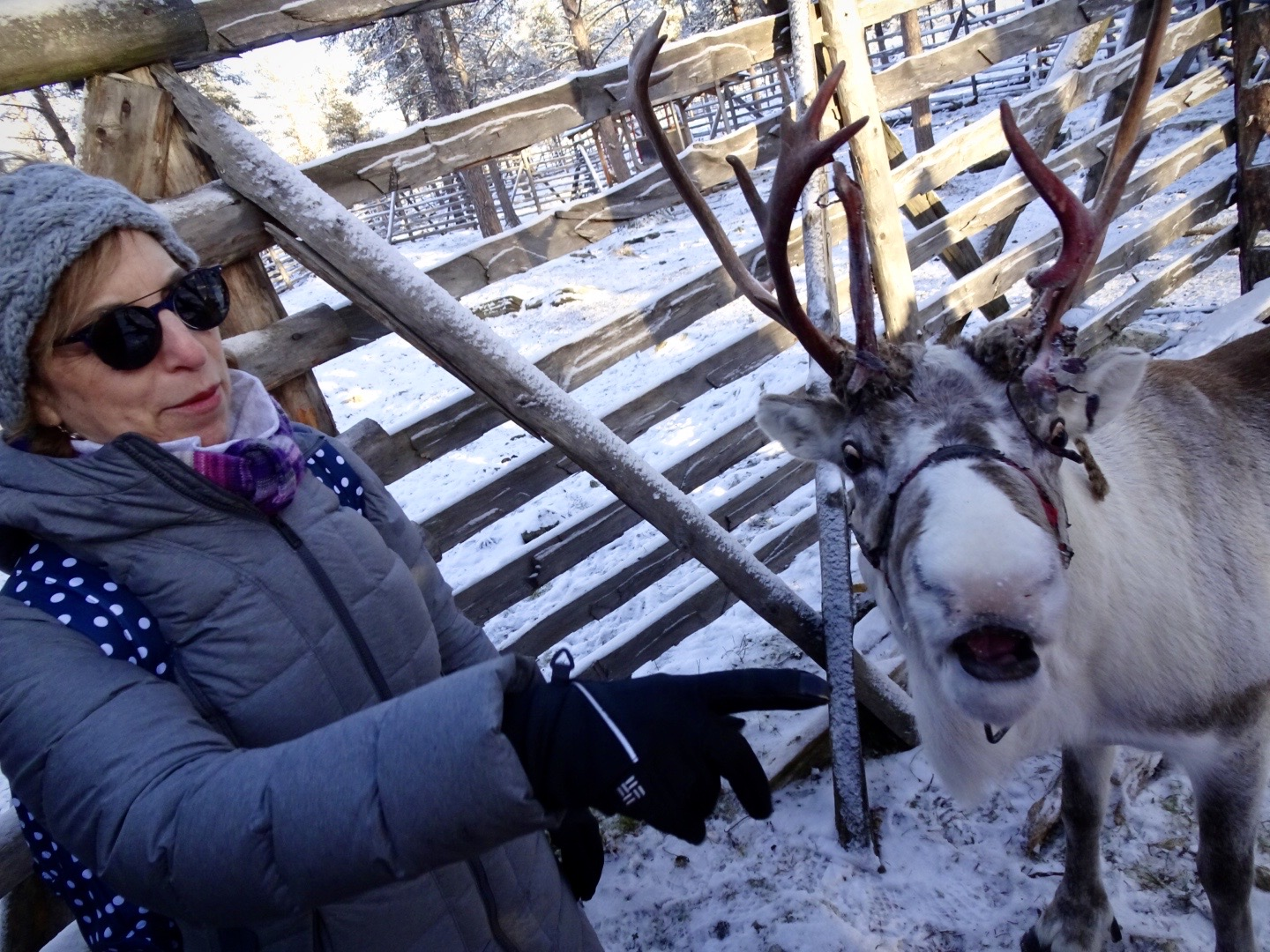 the writer with a reindeer