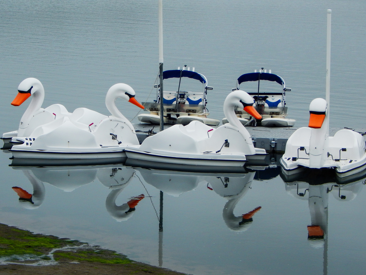 Swan boats at Carlsbad Lagoon