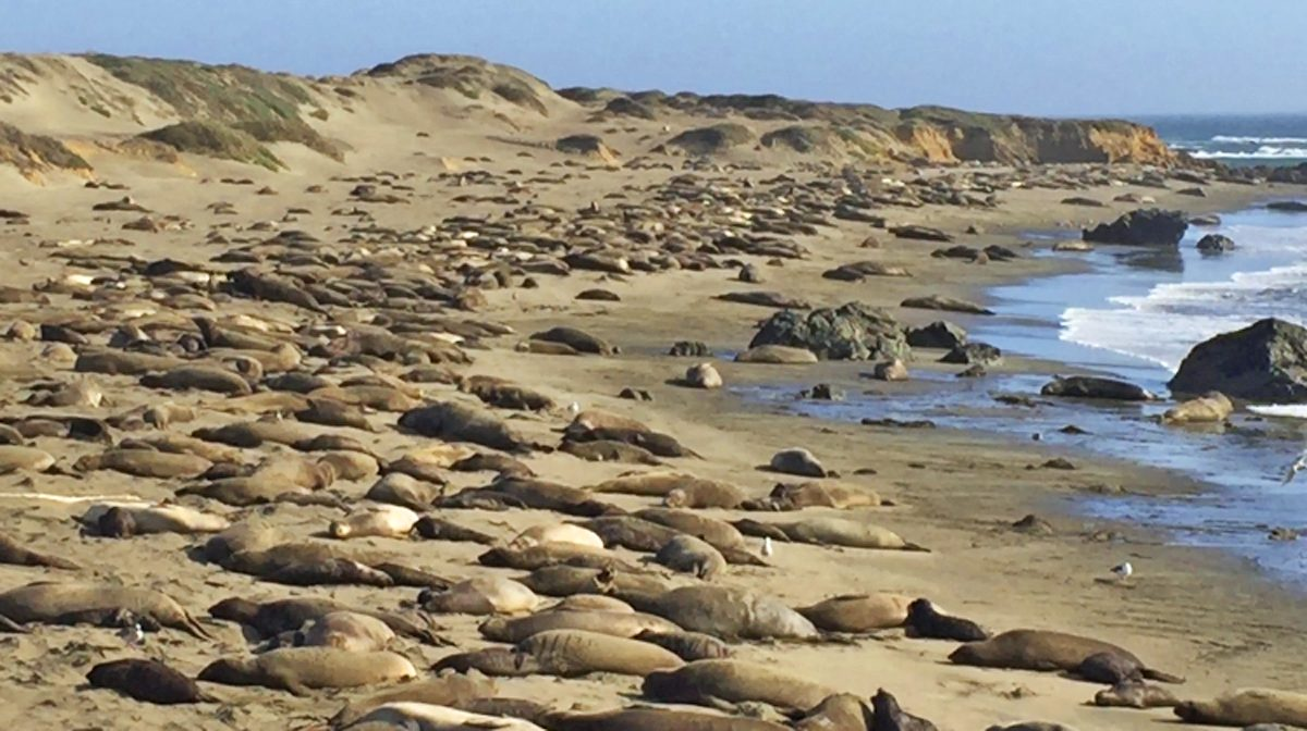 wildlife watching sea lions on a sand beach in California