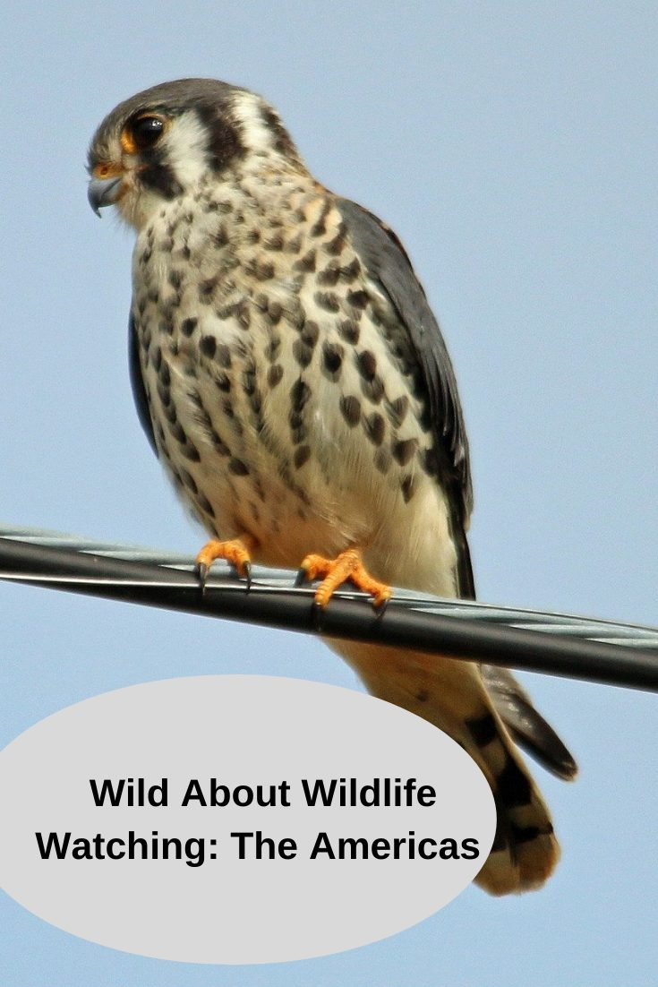 Wild about Wildlife Watching