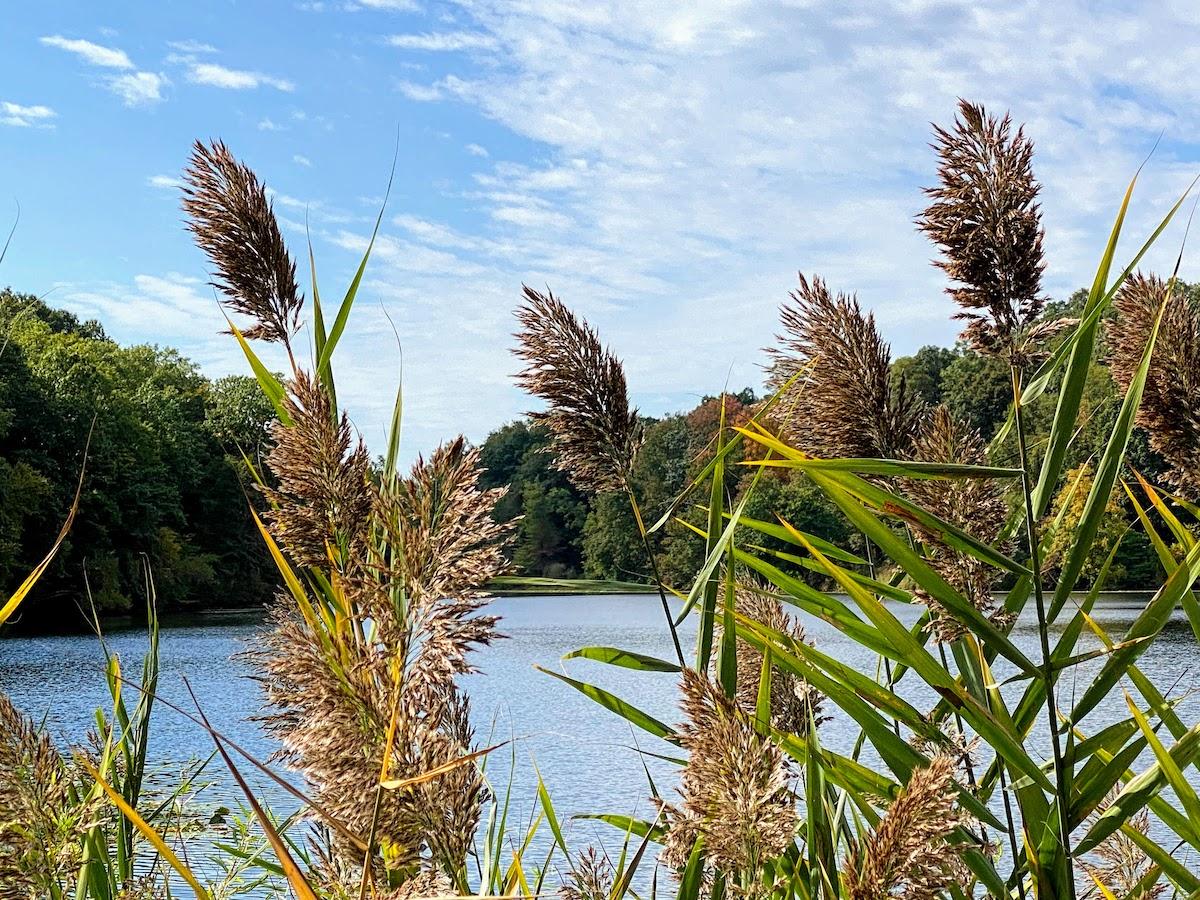 Swan Lake at Rockefeller State Park Preserve, Pleasantville, NY (credit: Irene S. Levine)