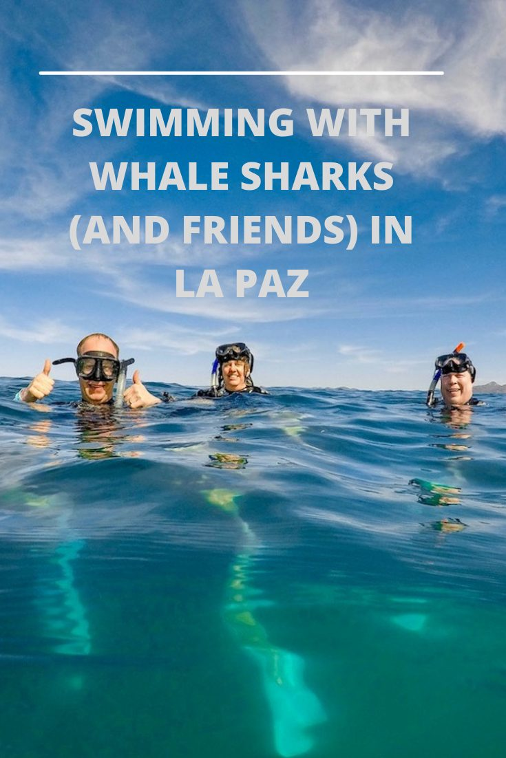 WHALE SHARKS IN LA PAZ PIN