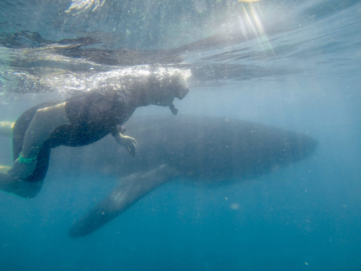 Jennifer beside a whale shark (credit: Cabo Adventures)