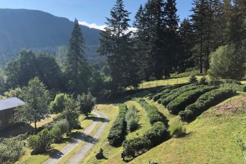Westholme Tea Farm in Vancouver, British Columbia
