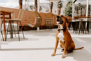 Boozehounds is in dog-friendly Palm Springs